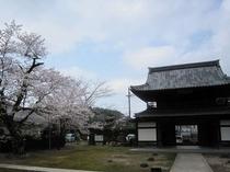 常高寺の門と桜