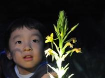 夜に咲く花の観察