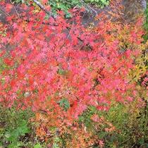 【周辺】紅葉