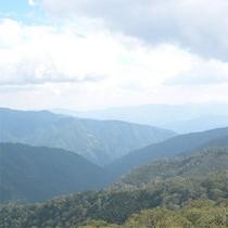 【周辺】原生林からの眺め
