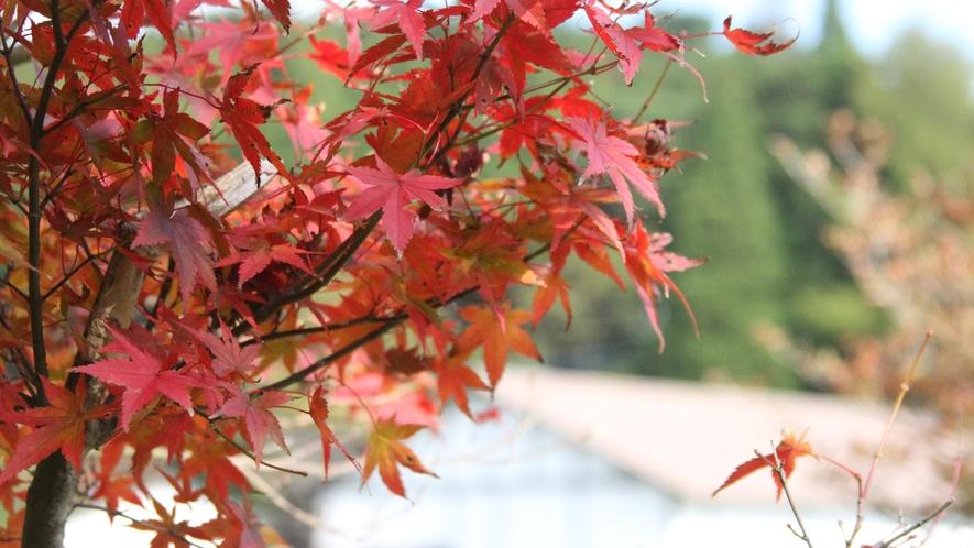 *【周辺】秋の紅葉