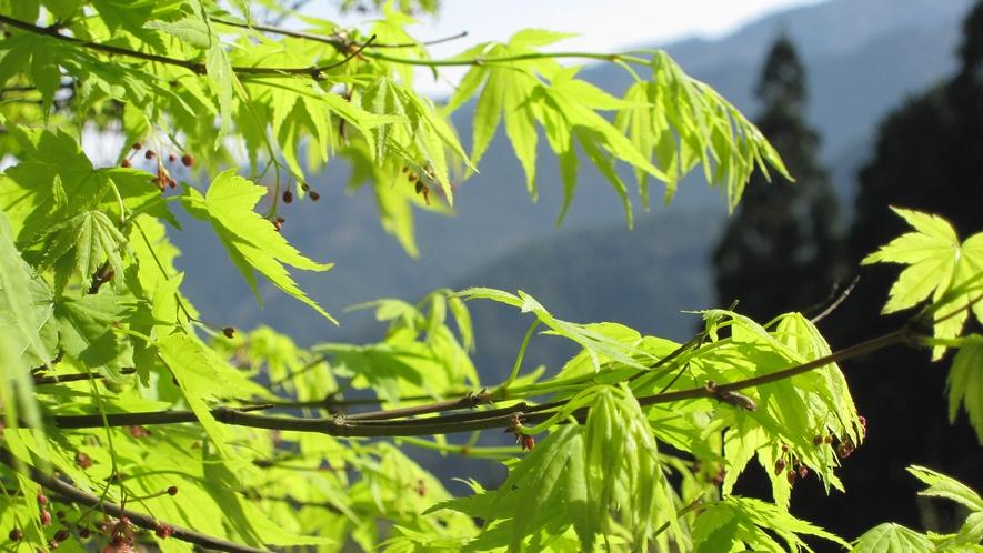 *【周辺】春の新緑