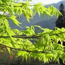 【周辺】春の新緑