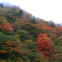 【周辺】秋の紅葉