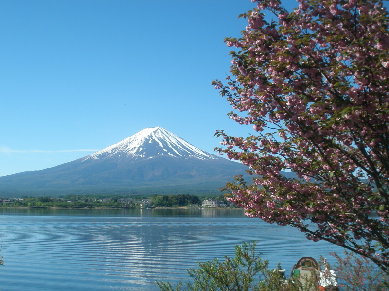 八重桜と富士山と河口湖