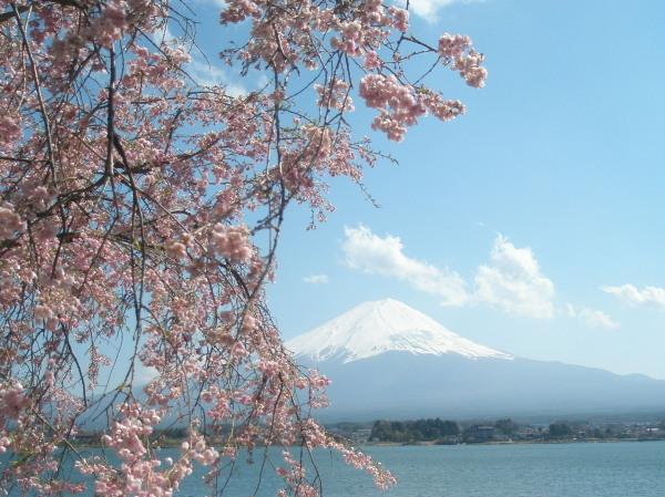桜と富士山と河口湖、その3