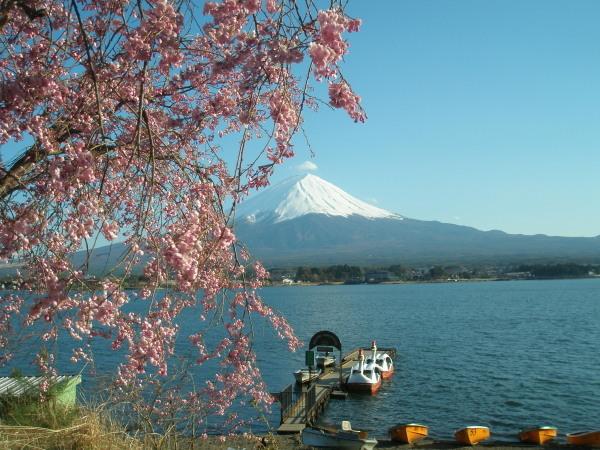 桜と富士山と河口湖、その2