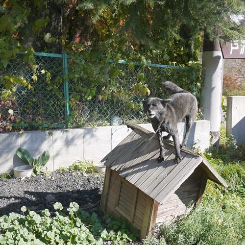 *【看板犬】看板犬クロちゃん・ハナちゃんと楽しくお散歩♪