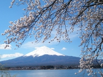 戸沢センターからの桜と富士山と河口湖