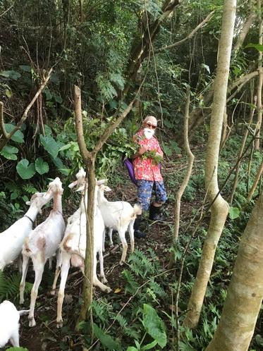 ヤギと山に登る