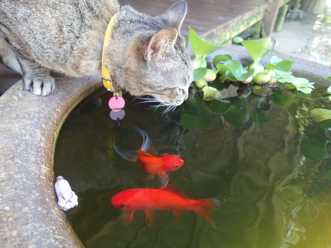 金魚とダヤン