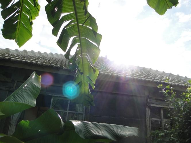 バナナの葉と空