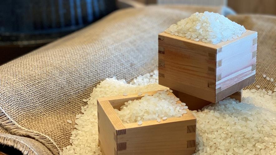 鹿児島県産ひのひかり 米粒はやや小粒で厚みがあり、全体的に丸みをもったお米です。