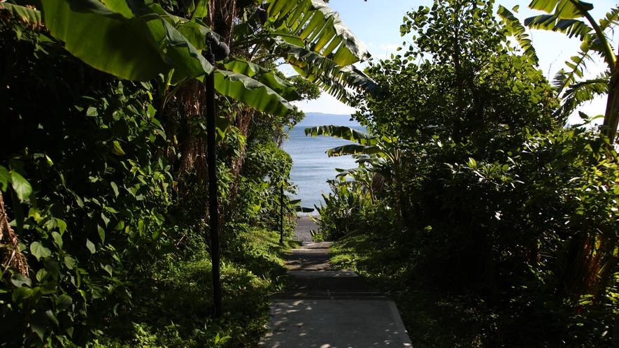 砂浜への小道 砂浜への小道 ホテル前庭から砂浜までお散歩はいかがでしょうか?