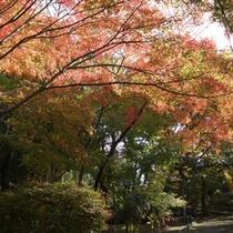 紅葉の隠れスポットの「為松(ためまつ)公園」がオススメ♪
