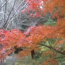 近隣の為松公園(紅葉)