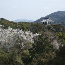 展望室からの風景