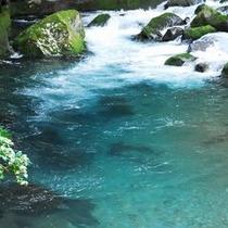 ◆天城の自然◆川の碧さ、苔の美しさ