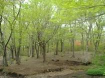 映山湖ガーデンの新緑