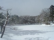 雪の映山湖
