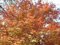 映山湖の紅葉