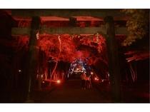 大原野神社ライトアップ3