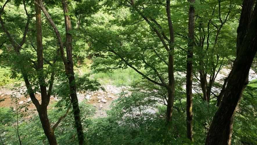 *景観(本館和室から)四季によって色々と表情を変える大自然!