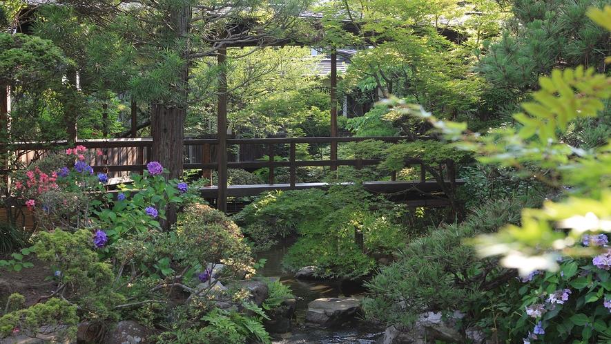 紫陽花と青葉が美しい庭園