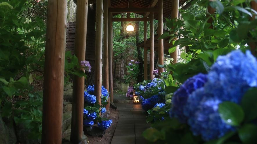 6月は紫陽花の回廊さながらの見事な情景を見られます