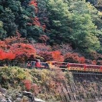 【秋のトロッコ列車】車窓から見る紅葉はまた格別です(亀岡トロッコ列車賞画像・h2612)