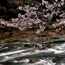 今年は船からの花見はいかが?!春の保津川下りの様子。