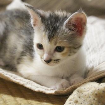 ★愛猫専用室|本館陣屋|和室8畳(2名〜4名様用)