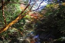 淀川の紅葉