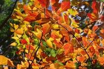 西部林道の紅葉