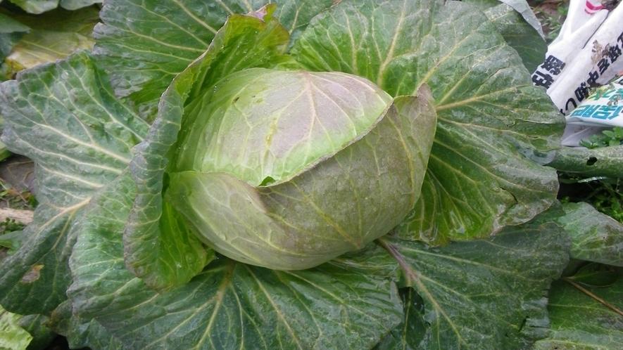 *野菜は自家製無農薬野菜を使用!