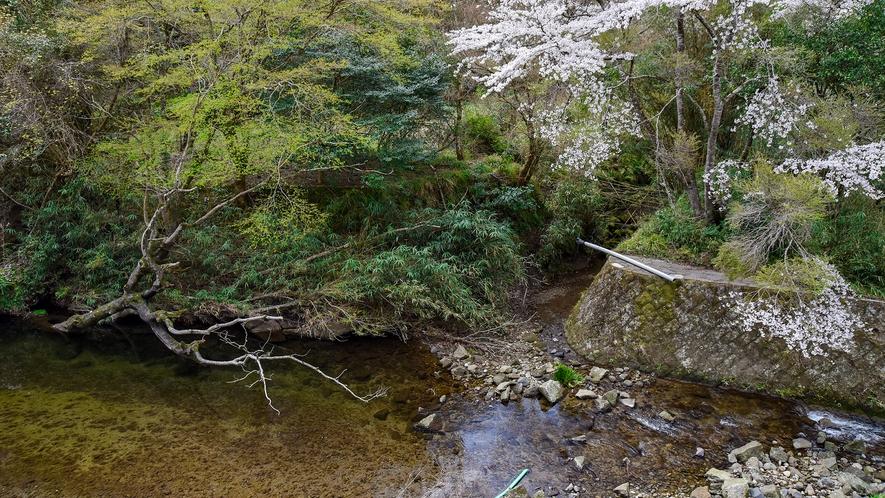 *【おまかせ和室】四季おりおりの自然の美しさは見飽きません