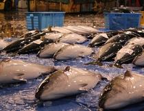 早朝、市場でその日の鮮魚を選ぶのが日課です。