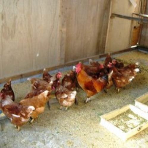 裏山で飼育している鶏(名古屋コーチン)の、新鮮な有精卵の卵かけご飯で、極上の朝の定番をお楽しみくださ