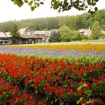 【周辺】季節の変化を楽しめる、自然溢れる環境。