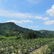 天空農園 1