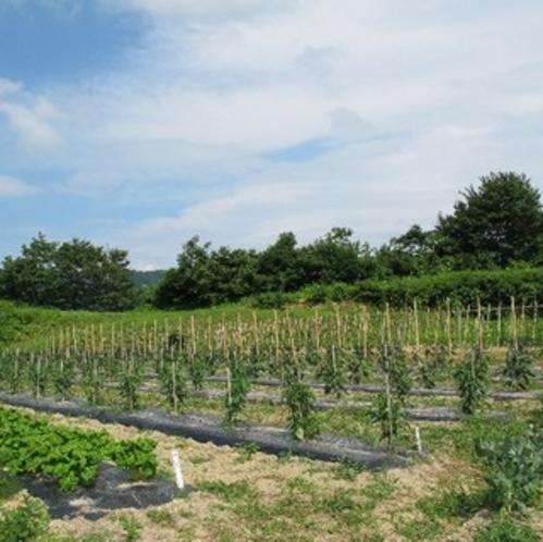 天空農園 2