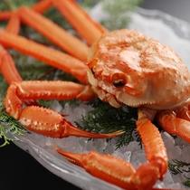 富山湾 冬の味覚「紅ズワイ蟹」