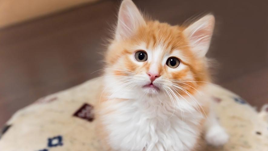 *【キャットルーム】かわいいネコちゃんがお待ちしています。