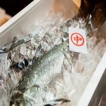 寺泊漁港でとれた新鮮な食材♪