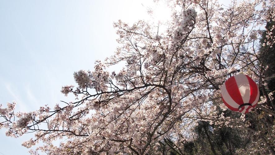 *【施設周辺】春には当館の前できれいな桜を見ることができます。