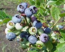 季節の農産物を使用1