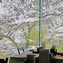 春のレストランは桜が一面に広がります