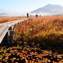 秋の尾瀬でハイキング!