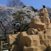 桐生が岡公園 動物園