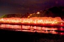 【桜のトンネル(夜桜)】当館の目の前に流れる旭川の対岸で綺麗なライトアップが見られます。